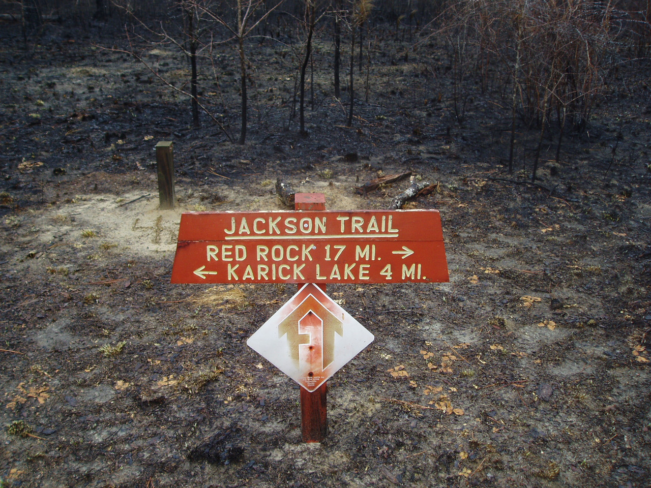 What's left after a prescribed burn<br /> PHOTO CREDIT: Robert Coveney / Florida Trail Association