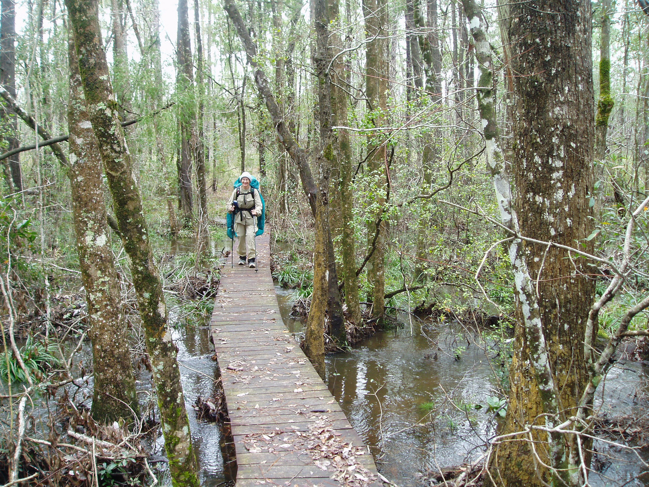 Backpacker in a titi swamp       <br /> PHOTO CREDIT: Robert Coveney / Florida Trail Association