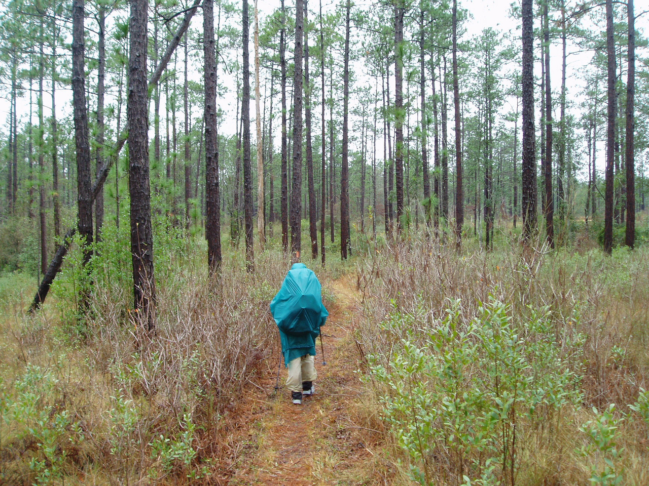 Backpacker in longleaf pine forest<br /> PHOTO CREDIT: Robert Coveney / Florida Trail Association