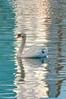 WhiteSwan