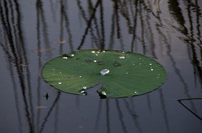 Lake Ivanhoe, Orlando