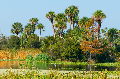 Orlando Wetlands in November