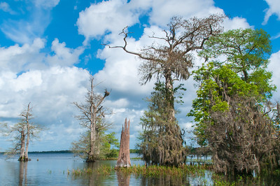 Blue Cypress Lake, Florida
