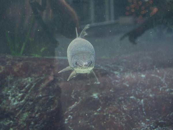 Tampa Aquarium visit December 23, 2016