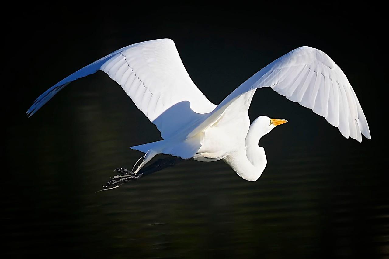 Graceful Flight,  Fishhawk Ranch
