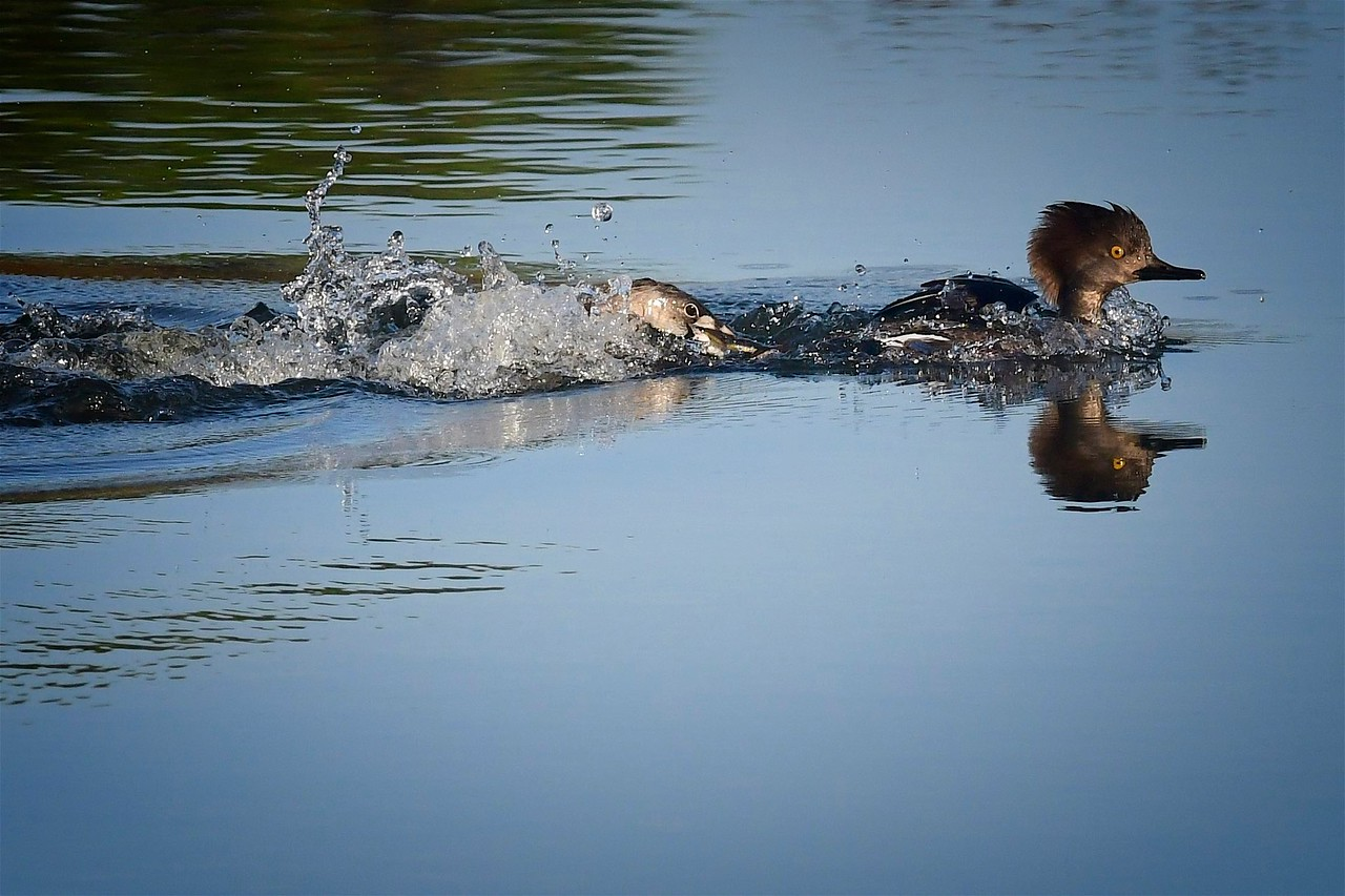 Yikes Fish Attack!, Fishhawk Ranch