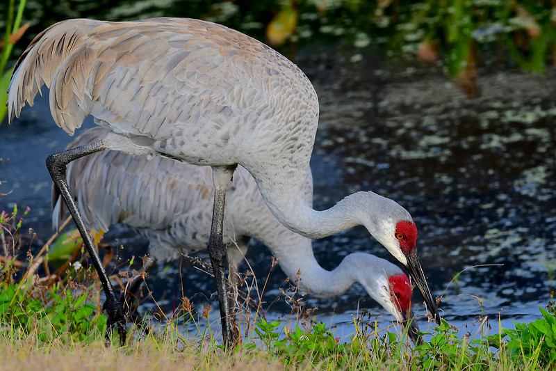Sand Hill Crane Partners,  Fishhawk Ranch