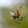 keybiscayne-orb-spider2-2750174983-o