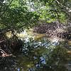 Long Key Mangroves