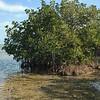 Mangrove coast at Laura Quinn Wild Bird Sanctuary