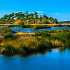 Florida Marsh...
