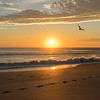 Sunrise with a seagull in Florida
