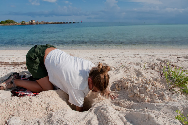 An NPS biologist digs a Loggerhead nest on Bush Key