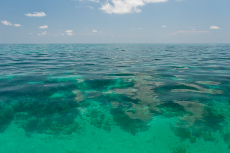 Calm, clear waters in the shallow foraging grounds of the Dry Tortugas make for perfect rodeo-capture conditions.