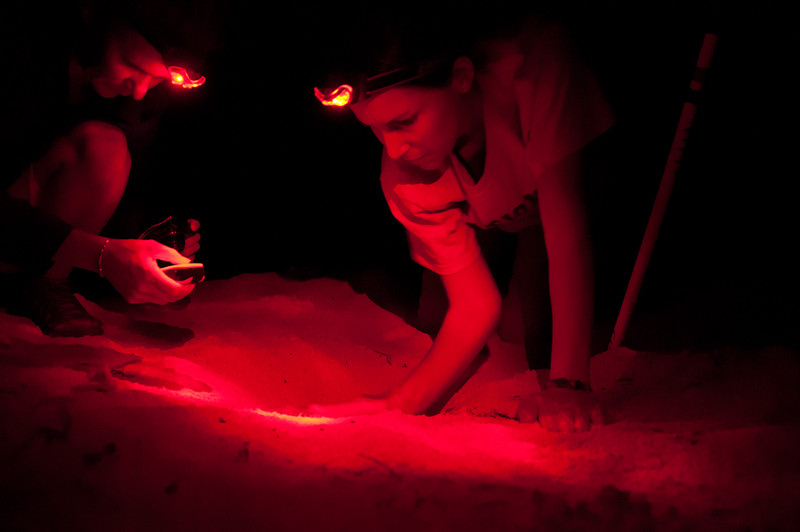 USGS biologists excavating a turtle nest several days after it's projected hatch date