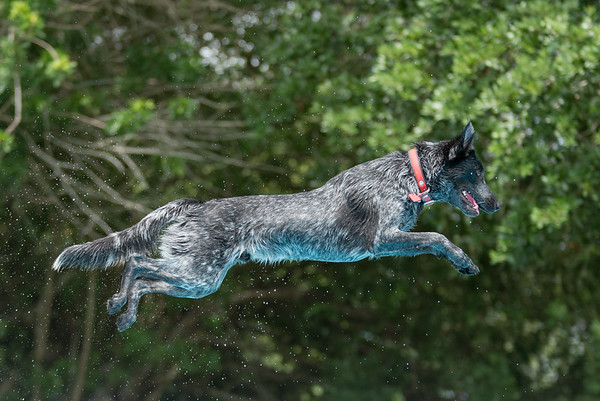 Florida West Coast Air Dogs Practice and Events