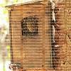 Honey bees creating a hive inside a birdhouse at Green Cay Wetlands in Boynton Beach, Florida, USA.