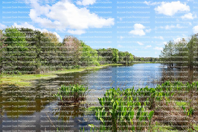 Green Cay Nature Center and Wetland, a beautiful 100 acres constructed wetlands located in Boynton Beach, Florida, USA.