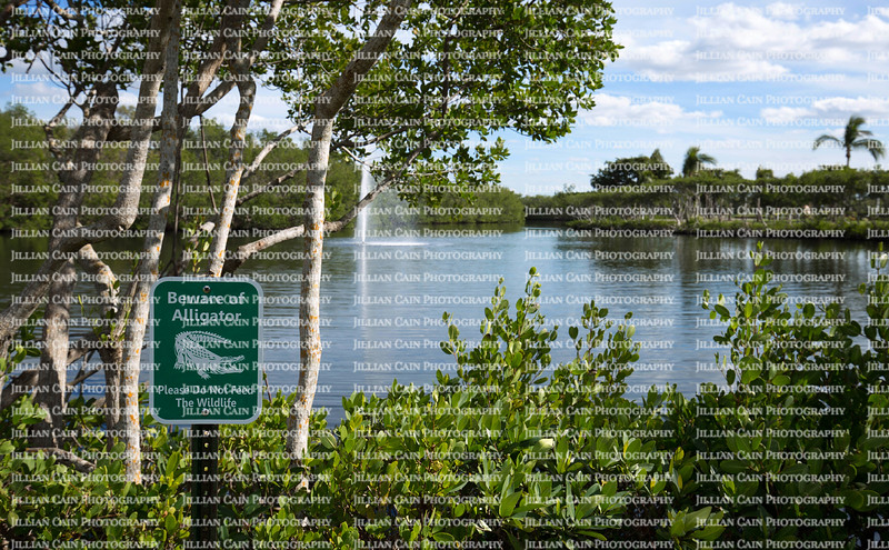 Beware of Alligator sign warns visitors of hidden dangers at a beautiful lake front park in Florida.