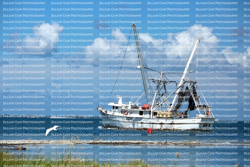 Shrimping boat heads on its daily trek to catch shrimp, shrimp is also known as pink gold.