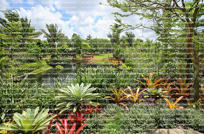 Naples Botanical Gardens beautifully designed with curves, water elements, colors and vertical landscaping.