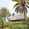 Large beautiful tiki hut in between Canary Island date palm trees.