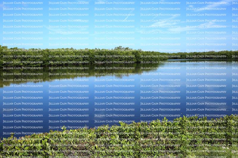 Beautiful view of J.N. Ding Darling National Wildlife Refuge Lake.