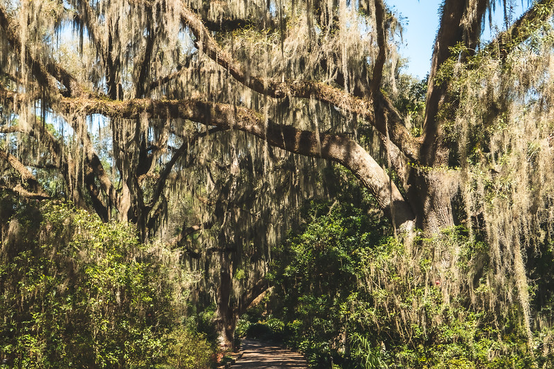 Alfred B. Maclay Gardens State Park in Tallahassee Florida