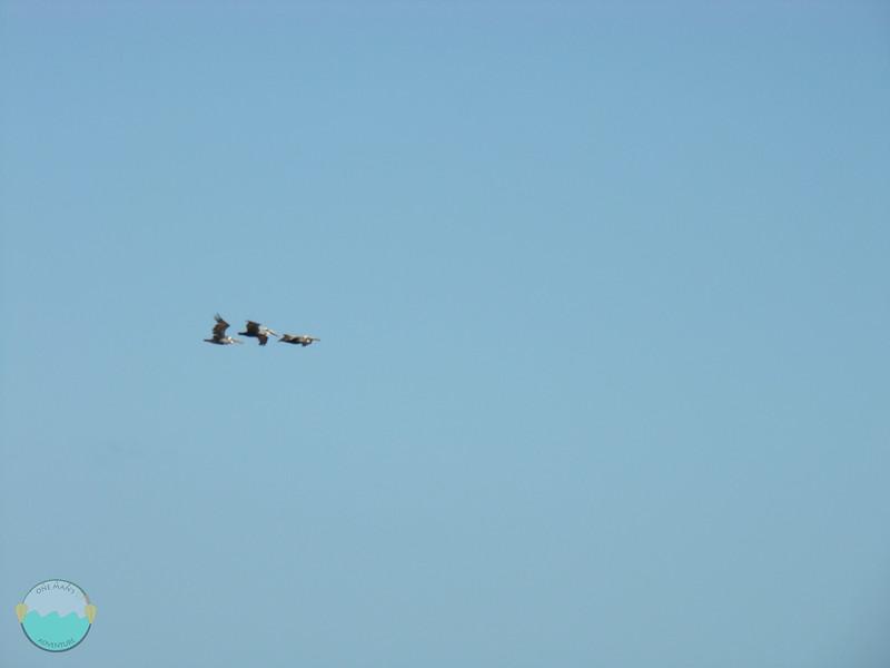 3 Herons.