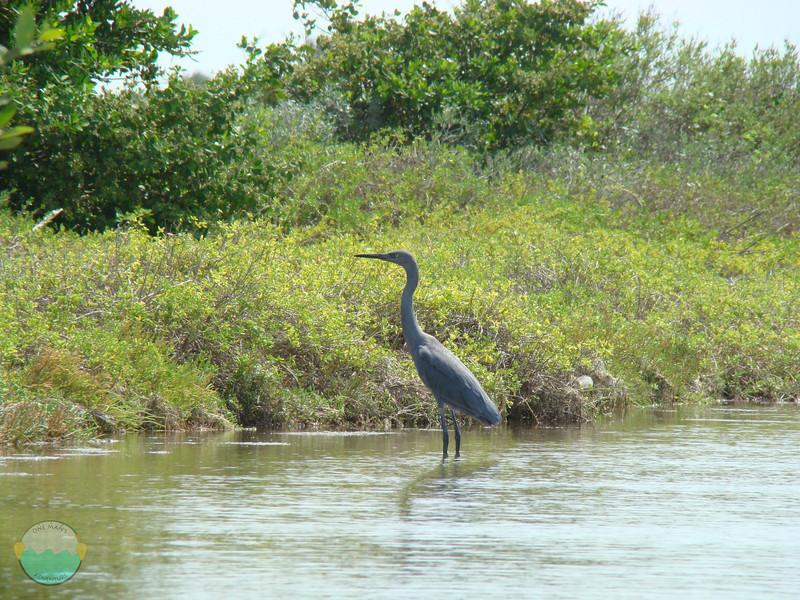 A bird fishing.