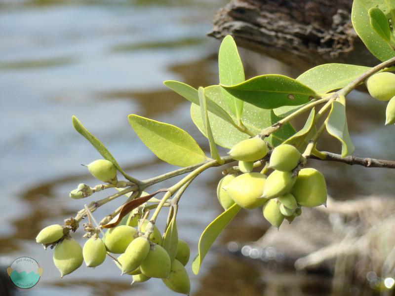 Mangrove close up.