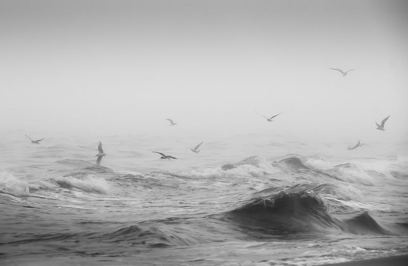 Seagulls over the Waves