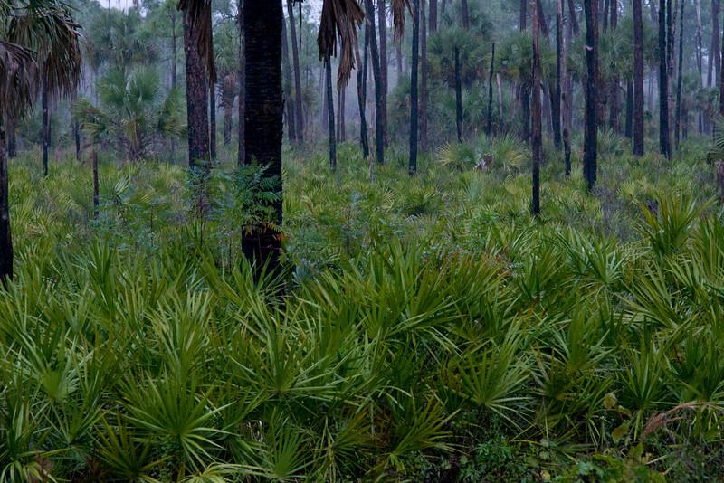 Corkscrew Swamp 12.14.07