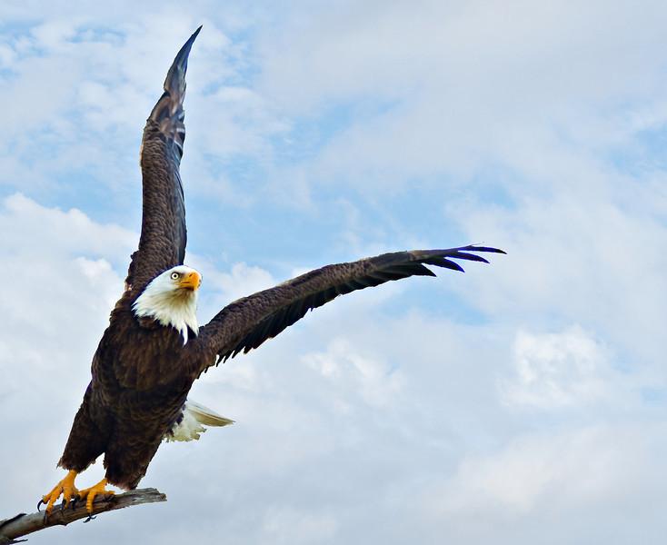 Birds SW FL
