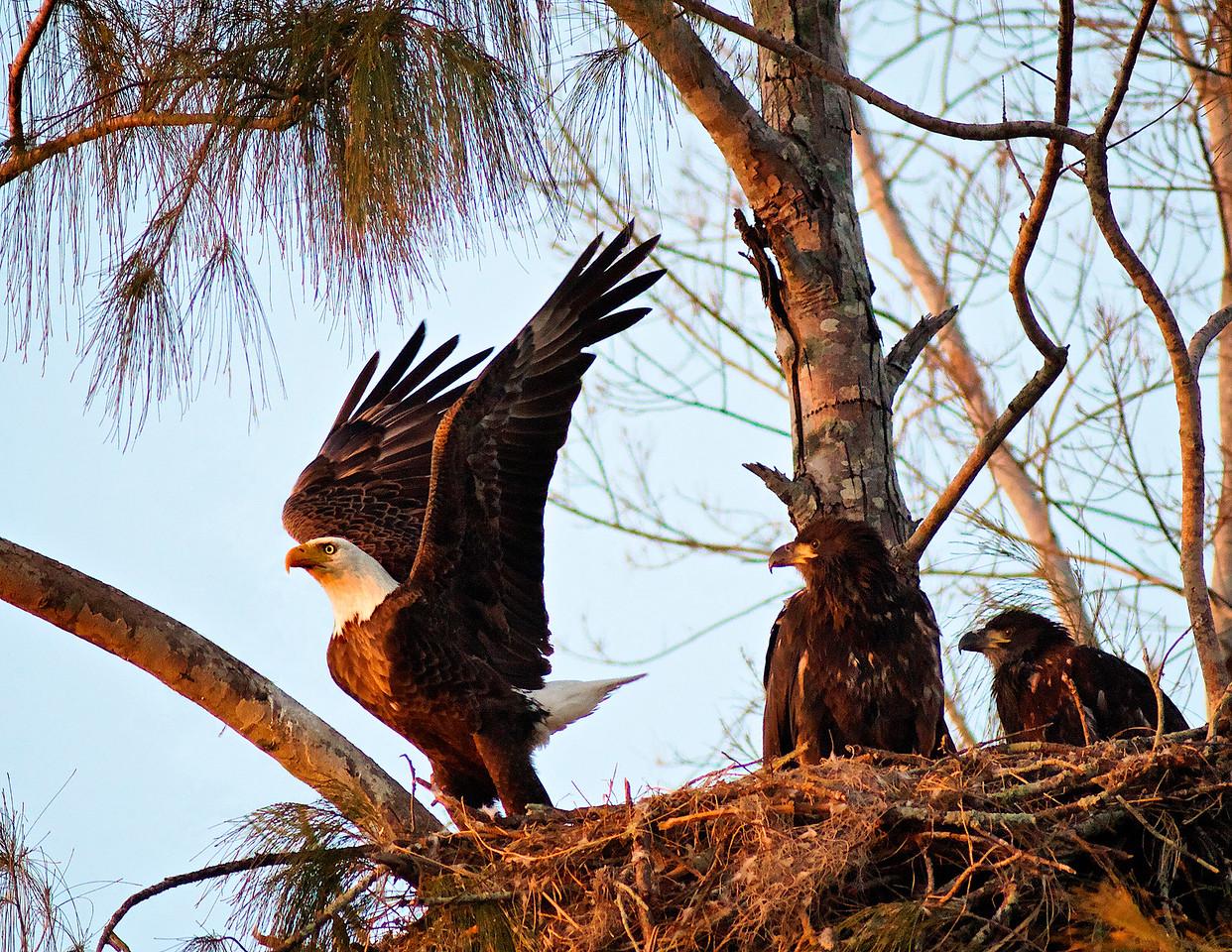 Birds SW FL  Birds SW FL
