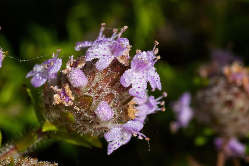 Wildflowers Crew Wilderness Area SW FL