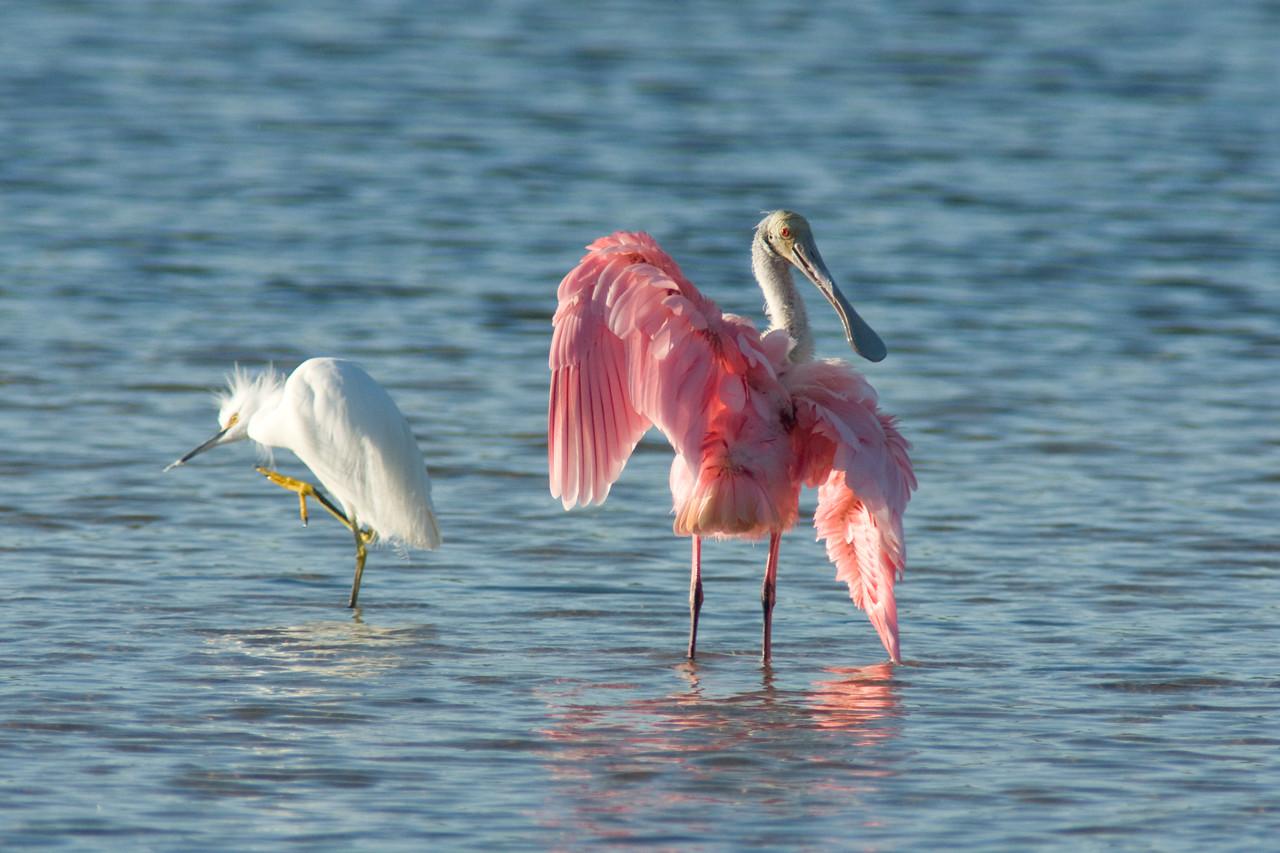 J Ding Darling Wildlife Preserve