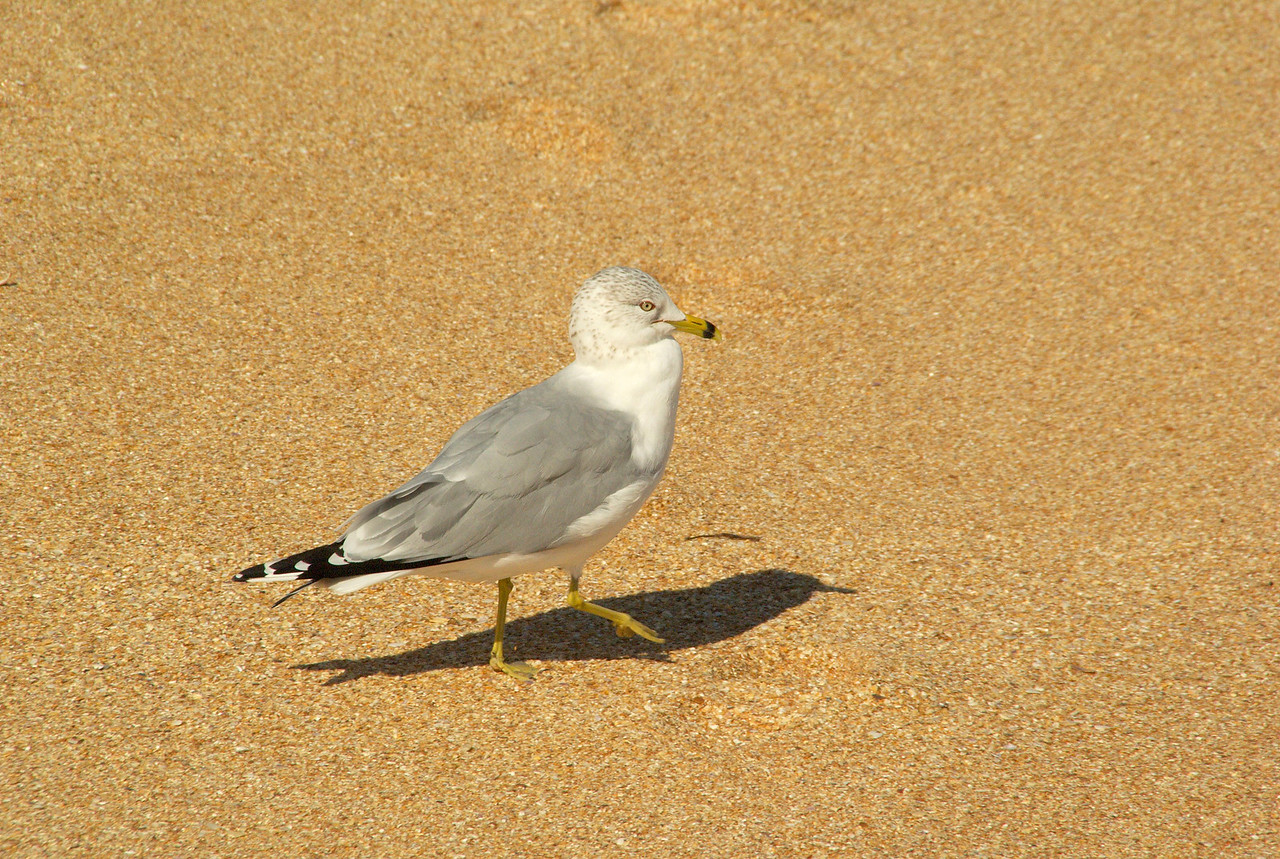 Hammock beach0047