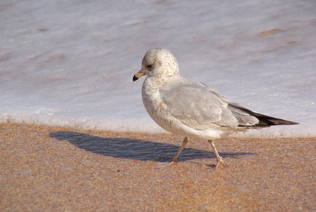 Hammock beach0172