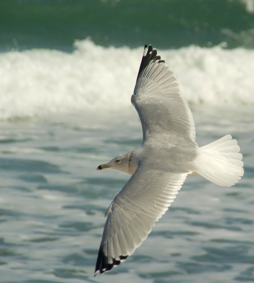 Hammock beach0133