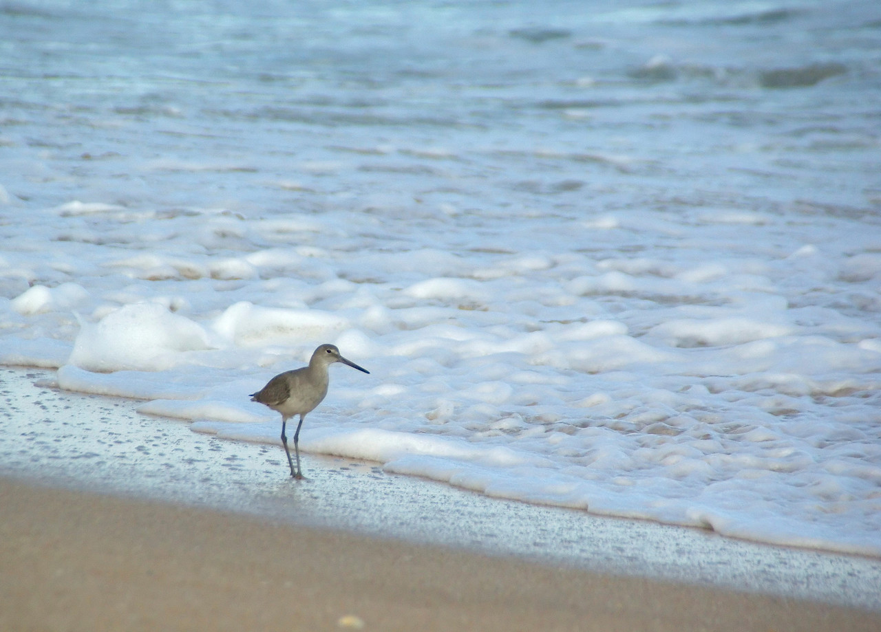 Hammock beach0089