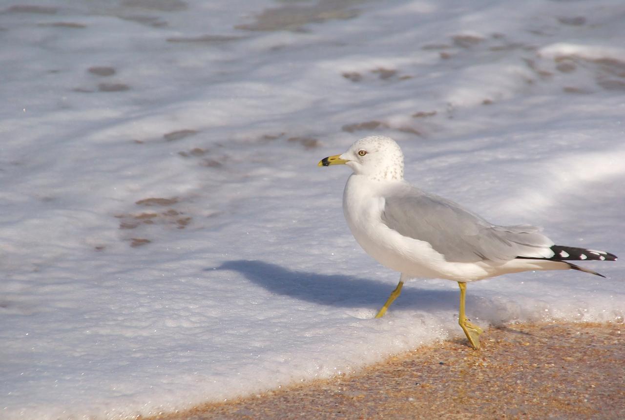 Hammock beach0171