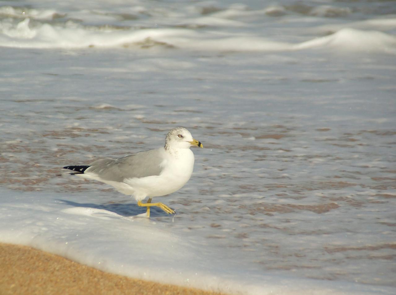 Hammock beach0123
