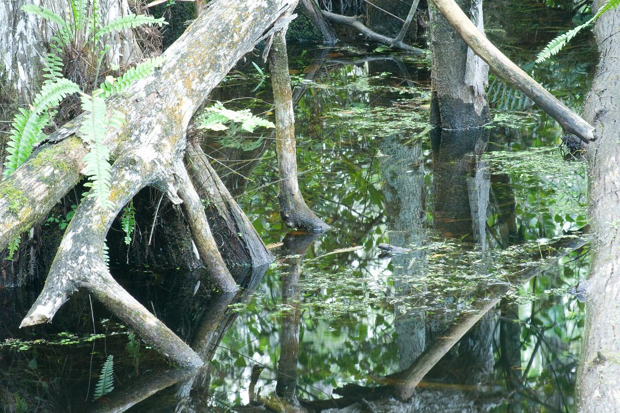 loop road pond