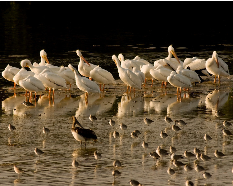 J Ding Darling wildlife preserve - -birds on sandbar evening twilight