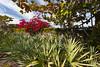 Tropical plantings at the Gasparilla Inn and resort in Boca Grande, Florida, USA.