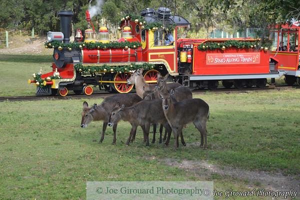 Busch Gardens Tampa - Christmas 2016