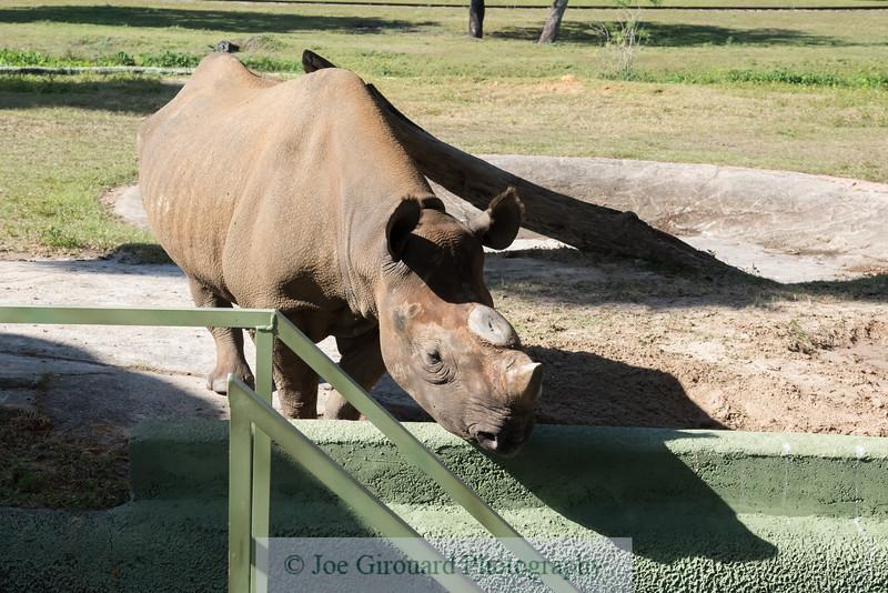 Busch Gardens Rhino Encounter
