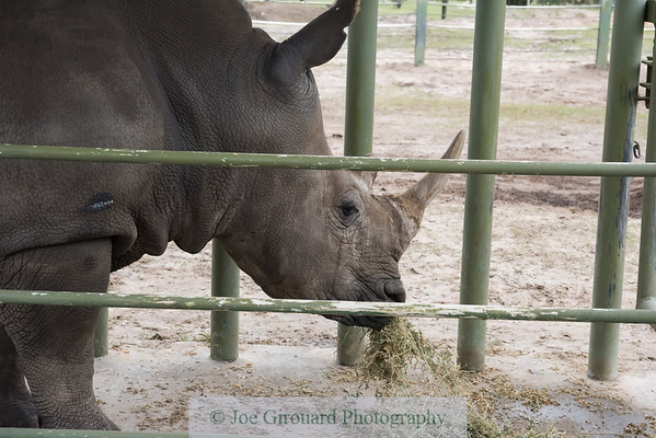 Busch Gardens Rhino Encounter