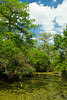 A swamp scene at the Corkscrew Swamp Sanctuary, Florida, USA.